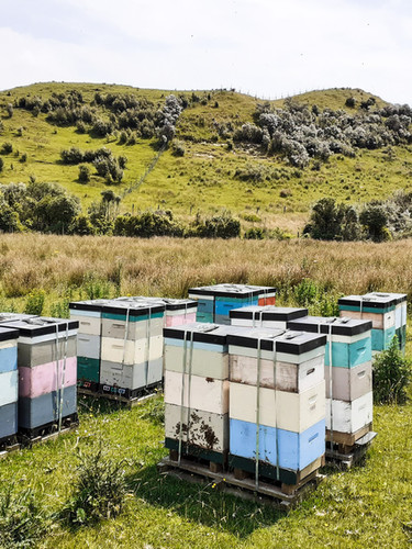 Hives on pallet