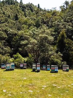 Hives%20longview%20DUH.jpg