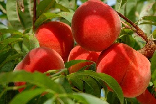 Scarlett Ohara Peach
