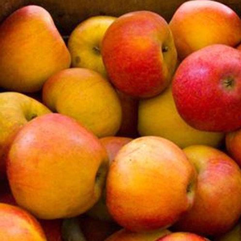 Greenmeadows Cox Apple