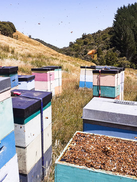 Open hives