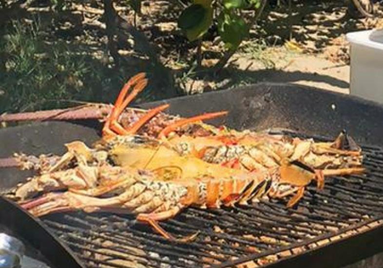 lobsteronthebarbie