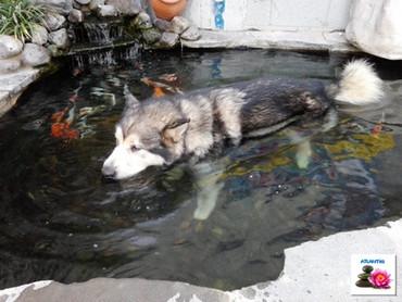 כלב מצטנן במים