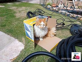 חתול בקופסת משאבה