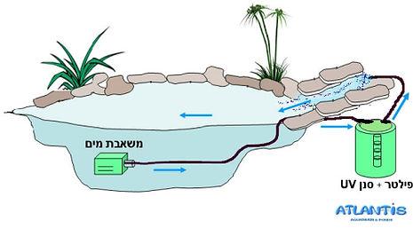 מערכת סינון בבריכת נוי