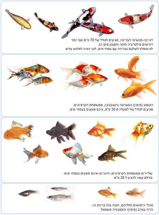 דגי בריכות נוי