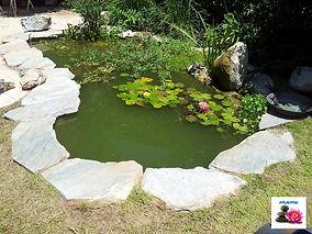 בריכת נוי מים ירוקים
