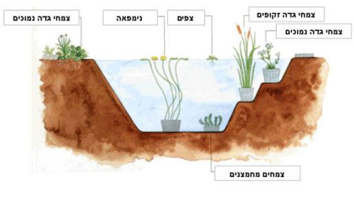 מיקום צמחי המים בבריכה