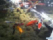 דגי בריכה