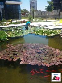 בדיקת צמחיה בבריכה