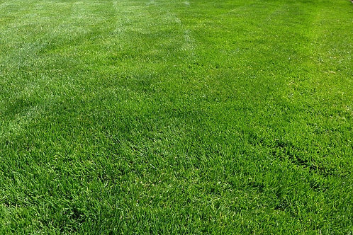 Artificial grass by sqft (includes instalation)