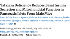 Tafazzin Deficiency Reduces Basal Insulin Secretion and Mitochondrial Function in Pancreatic Islets
