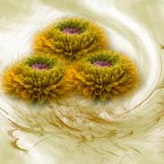 3bloemen.jpg