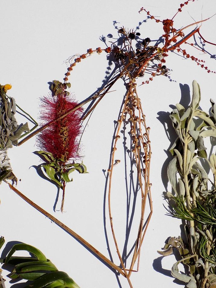 Greek herbs,kafelonian plants, plants of greece