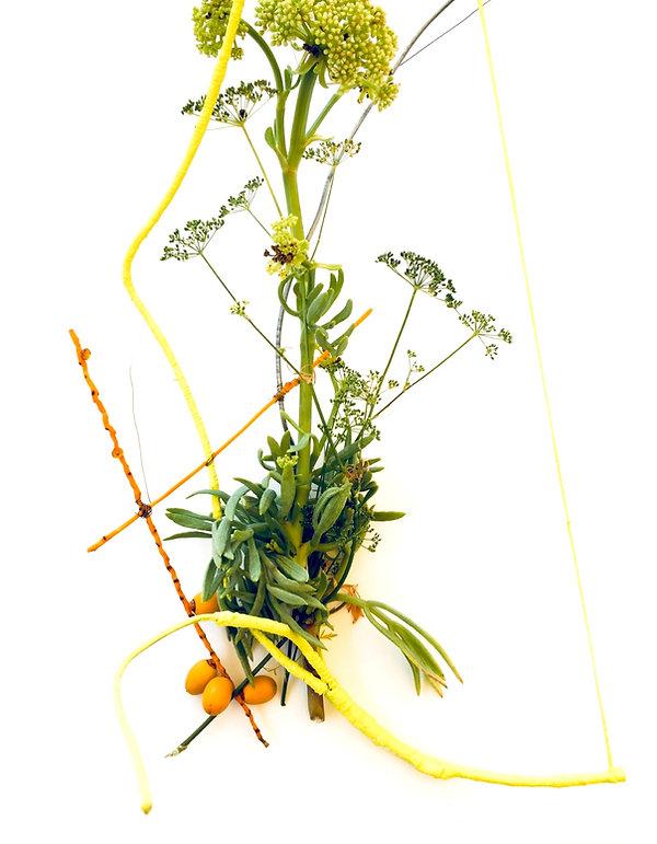 iman person, sea fennel