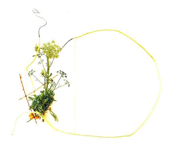 sea fennel, kefalonia, island botanica, iman person, ionion center for art and culture, greece flora