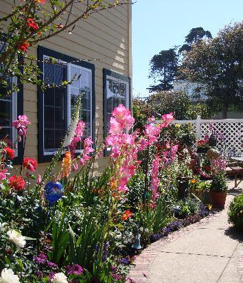 Our Garden in Bloom
