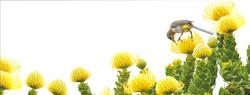 pincushion.sugarbird