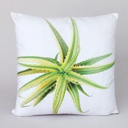 succulent 11