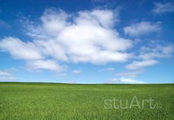 053 wheat.jpg