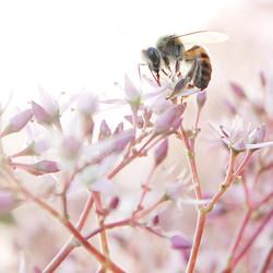 pollinators and predators
