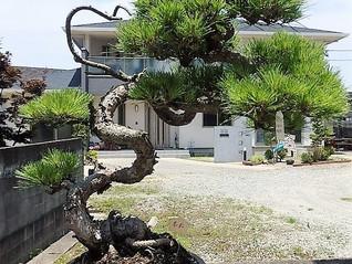 盆栽の定期的な入れ替え