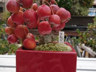 リンゴと柿が