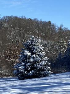 Snow 15.HEIC