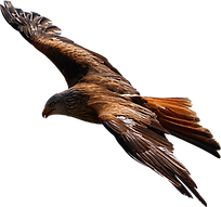 Eagle-Flying-Transparent-Background-PNG.