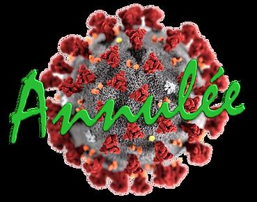 Coronavirus ann.png