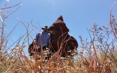 Termites in Perth | Ecopest WA | 0488661327