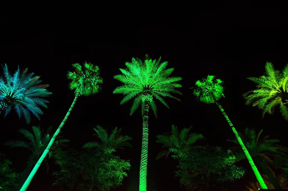 Palm Tree-huge.jpg