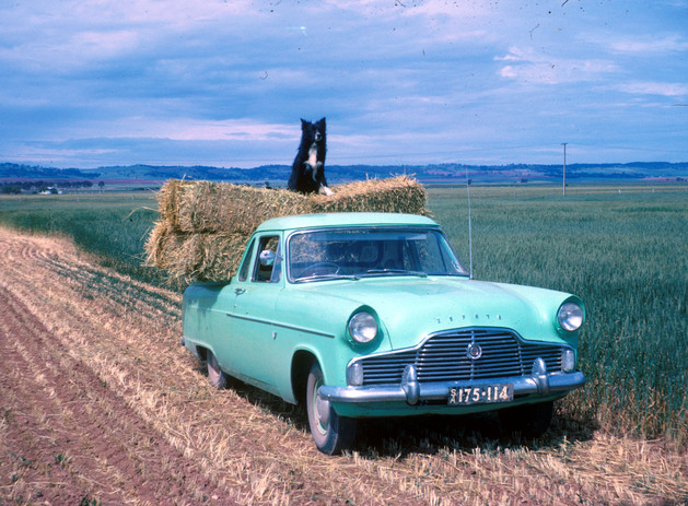 Pluto on Zephyr loaded with few hay bakes c 1962