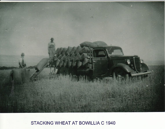 Stacking wheat at Bowillia c 1940.jpg