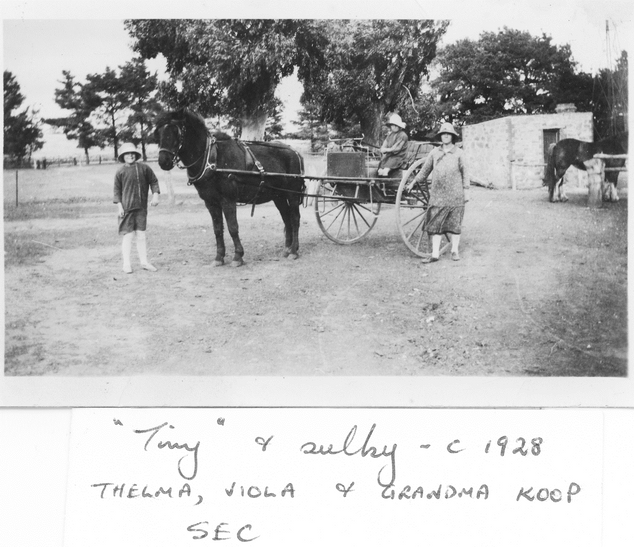 Koop Family with Sulky c 1928 Picture69.