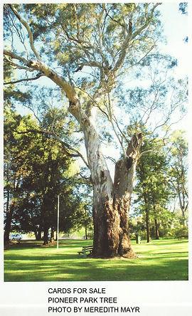 Pioneer Park Tree.jpg