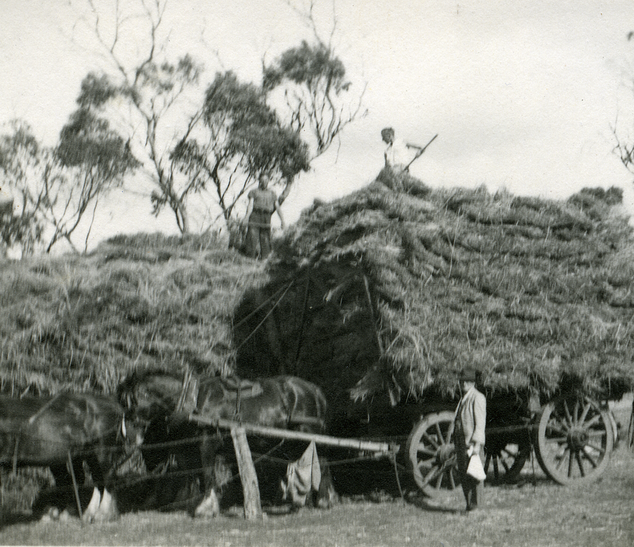Loading Hay on horse-drawn dray Picture1