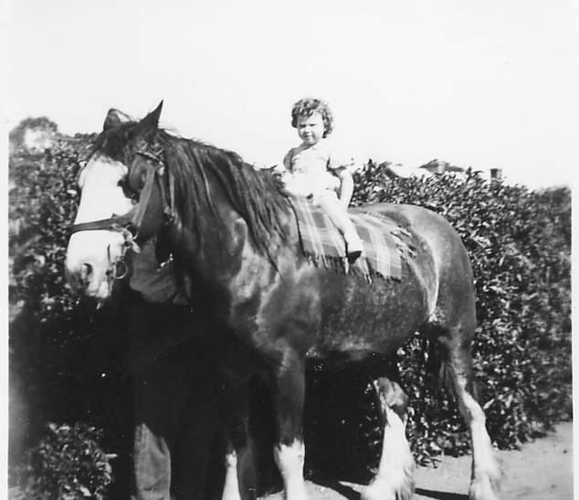 Girl on draught horse Picture67.png