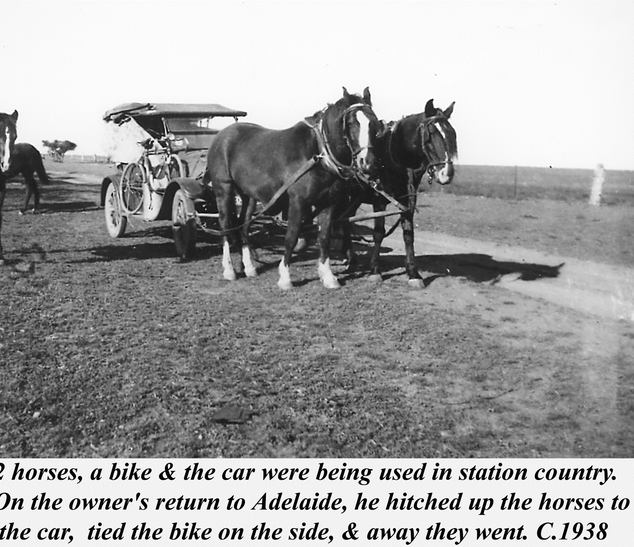 Horses towing car and bike Picture130.pn