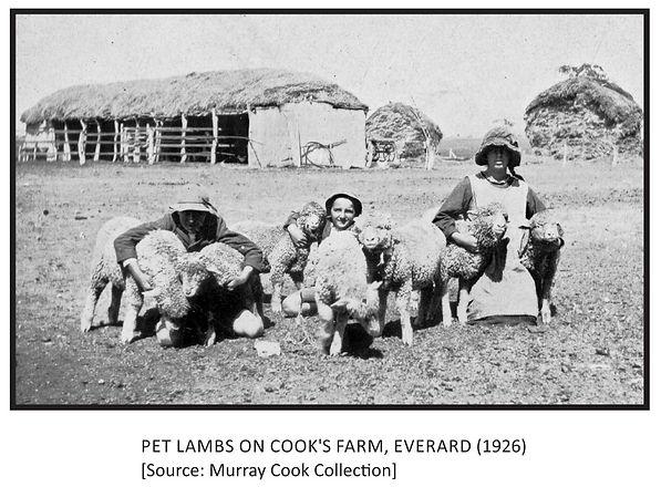 Pet Lambs on Cook's Farm, Everard (1926)