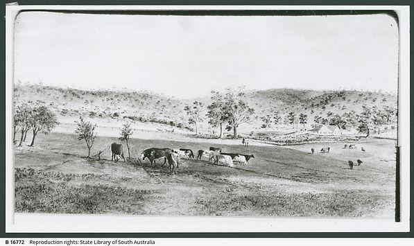 William Robinson's Hill River Station co
