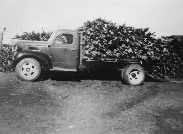 Truck load of wood Picture147.png