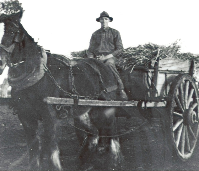 Horse with cart of hay Picture126