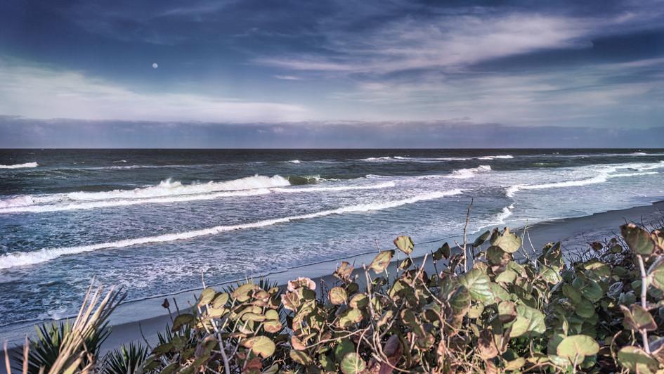 Sea Grapes in Moonlight