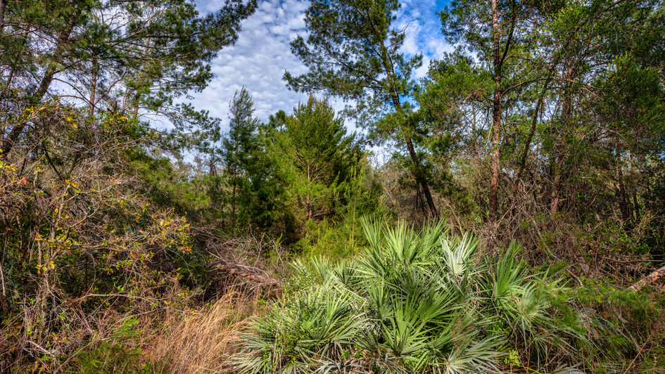 Florida Vegetation