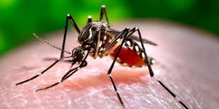 Summer Safety Series:  Mosquito Prevention