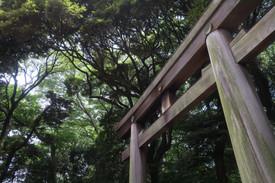 Upward Views - Tokyo, Japan