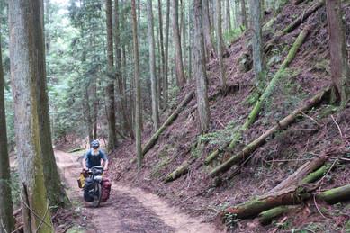 Unplanned Mountain Biking - Highway 28, Japan