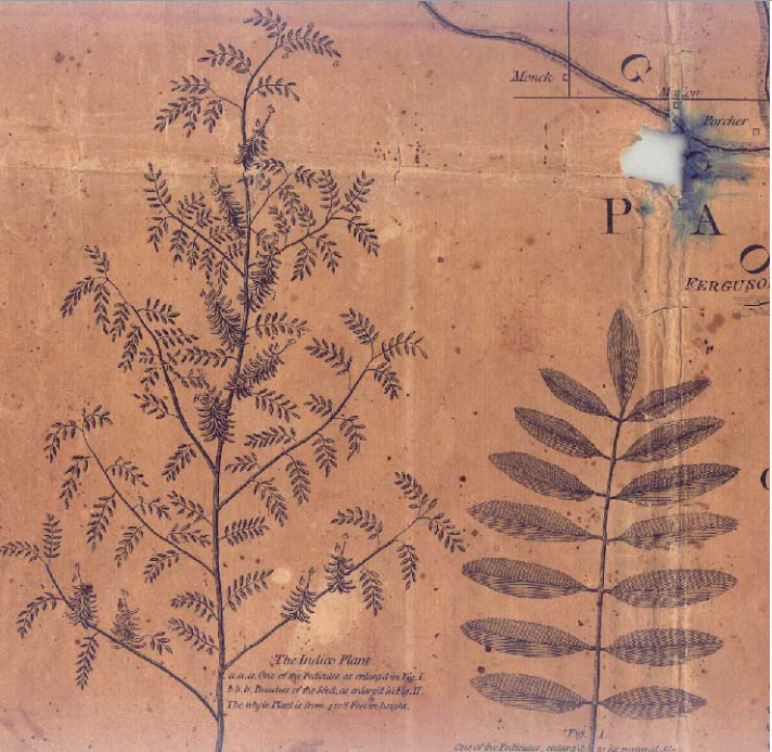 AMERICAN INDIGO PLANTATIONS