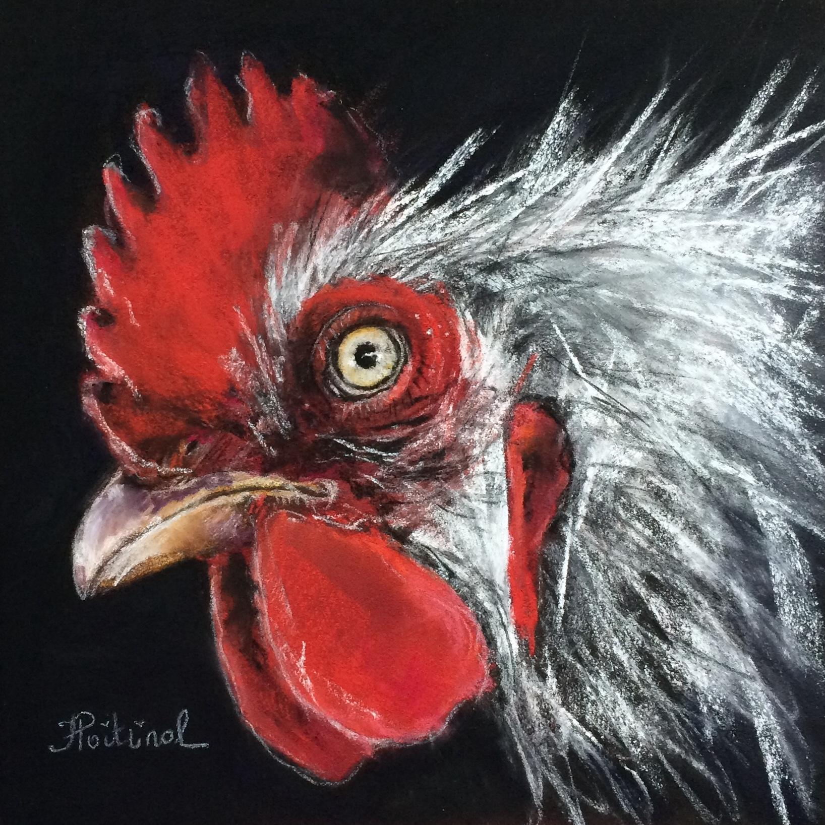 Poule ou coq